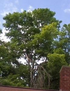 0828141246 tree 3