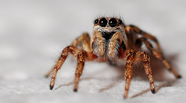 spider-564685_640-2